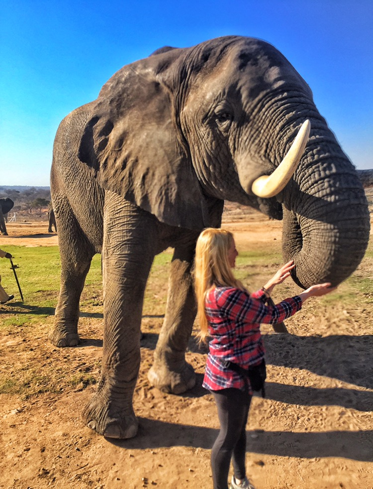 Is it possible to fall in love with an elephant?